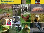 consumers omnivores