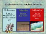 archaebacteria ancient bacteria