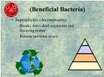 beneficial bacteria1
