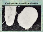 conjugation sexual reproduction