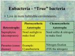 eubacteria true bacteria