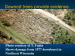downed trees provide evidence