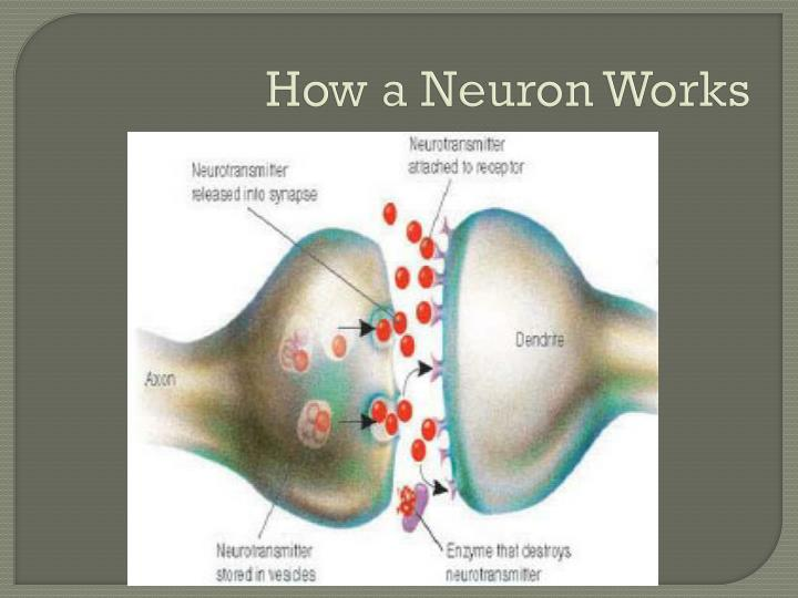 How a Neuron Works