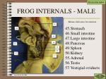frog internals male