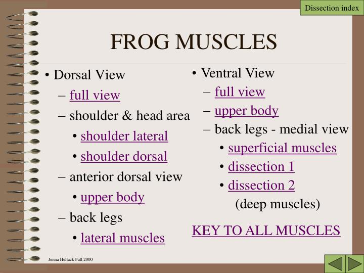 PPT - FROG DISSECTION PowerPoint Presentation - ID:6851320