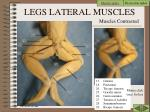 legs lateral muscles