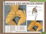medial leg muscles deep