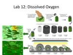 lab 12 dissolved oxygen1