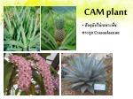 cam plant