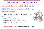enzymes protectrices des ros