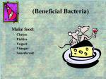 beneficial bacteria2