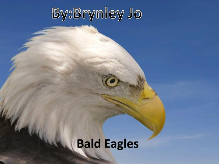 bald eagles n.
