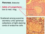 pancreas endocrine