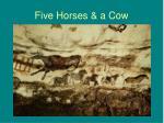 five horses a cow