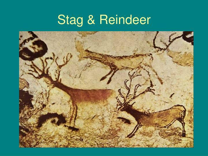 Stag & Reindeer