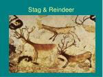 stag reindeer