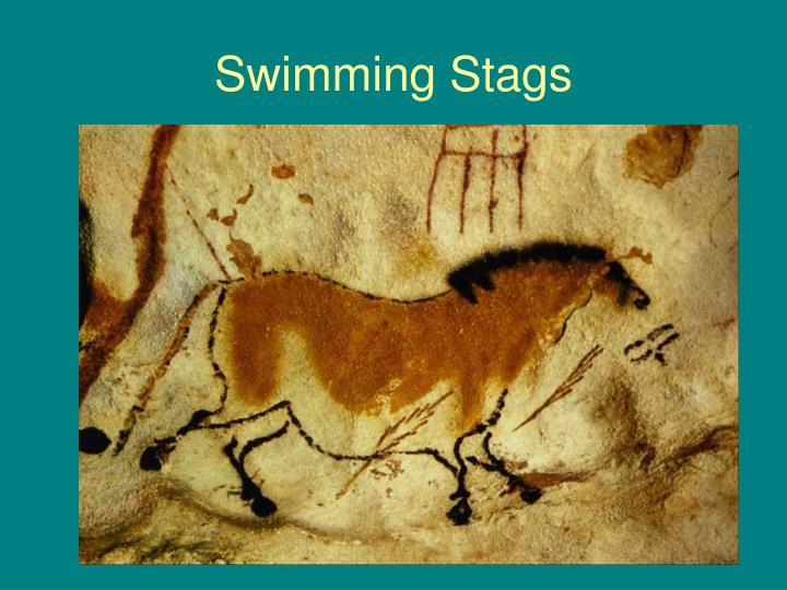 Swimming Stags