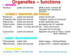 organelles functions