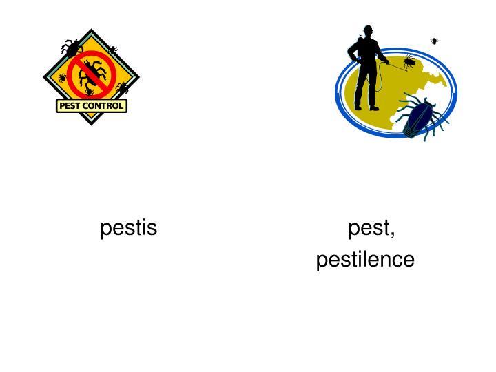 pestispest,