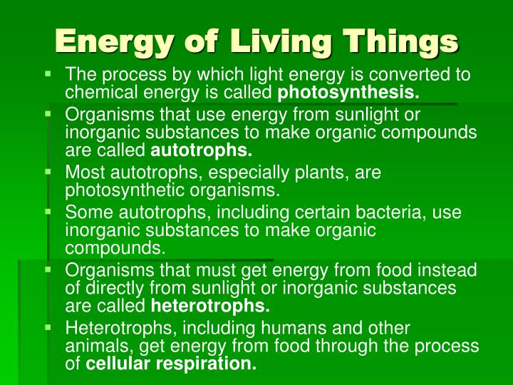 energy of living things n.