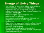 energy of living things