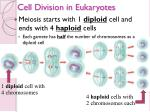 cell division in eukaryotes13