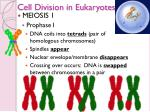 cell division in eukaryotes14