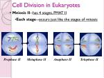 cell division in eukaryotes18