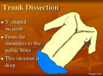 trunk dissection