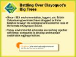 battling over clayoquot s big trees