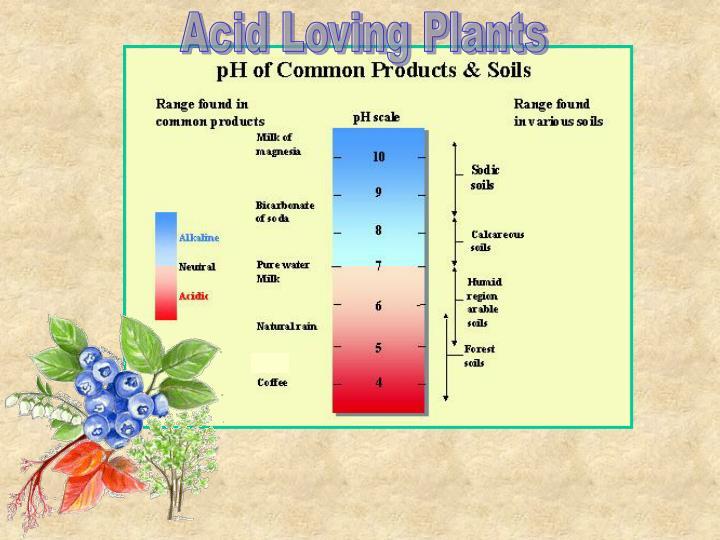 Acid Loving Plants