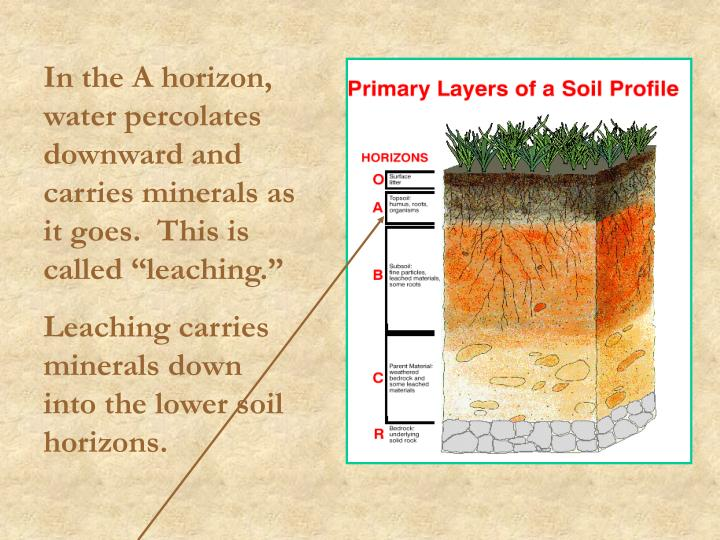 """In the A horizon, water percolates downward and carries minerals as it goes.  This is called """"leaching."""""""