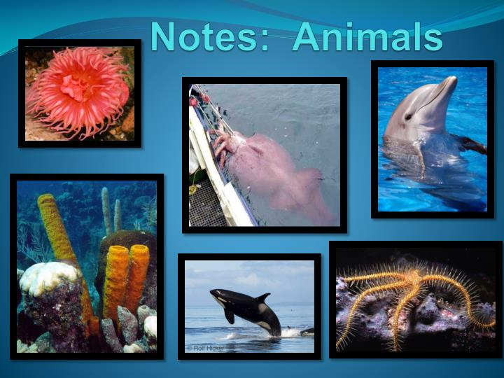notes animals n.