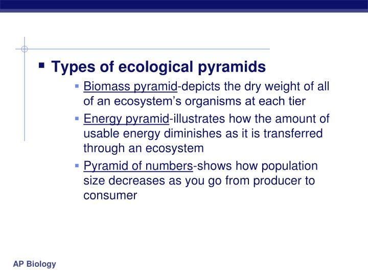 Types of ecological pyramids