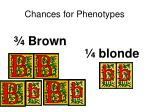 chances for phenotypes