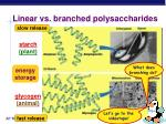 linear vs branched polysaccharides