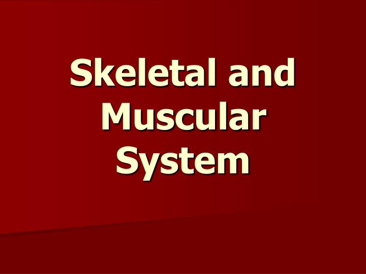 skeletal and muscular system n.