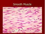 smooth muscle1