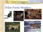 feline family members