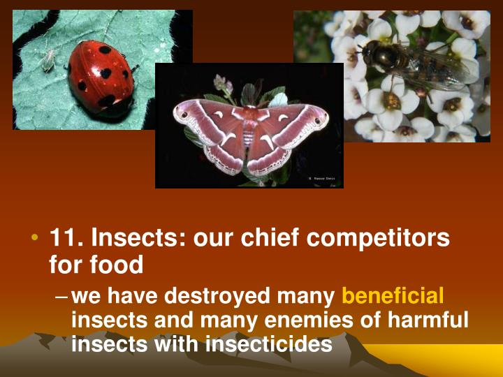 11. Insects: our chief competitors for food