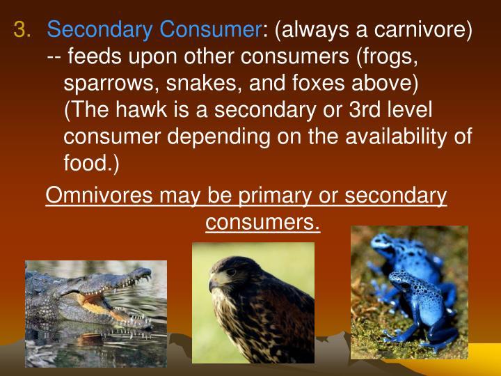 Secondary Consumer