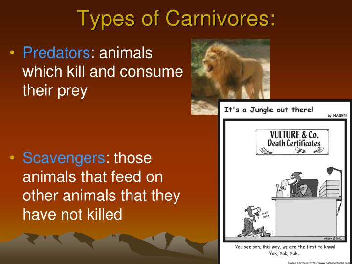 Types of Carnivores: