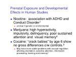 prenatal exposure and developmental effects in human studies
