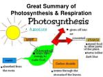 great summary of photosynthesis respiration