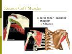 rotator cuff muscles2