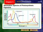 absorption spectra of photosynthetic pigments