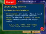 cellular energy continued