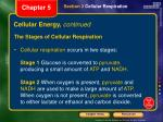 cellular energy continued1