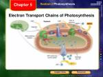 electron transport chains of photosynthesis
