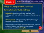 energy in living systems continued